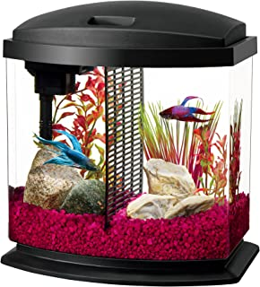 betta fighter plakat