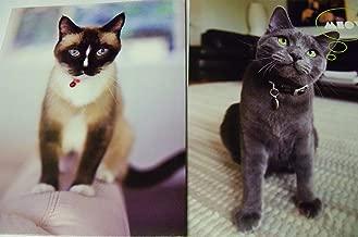 Innovative Design 101 Kitten Folder 2 Pack ~ Blue Eyes, Meow (Really?)
