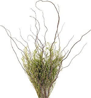 Green Floral Crafts Curly Willow Branches (Bunch of 8 Stems), 3-4Ft Tall, 3-Tone Brown & Caspia