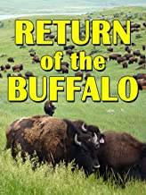 Return Of The Buffalo: Restoring The Great American Prairie