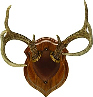 Walnut Hollow Country Deluxe Antler Display Mounting Kit in Solid Walnut for Mule Deer & Whitetail Deer