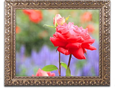 Amazon Com Ptm Images 1 20772a 1 Unit Orange Poppies Frame 14 By 14 Inch Gold Set Of 2