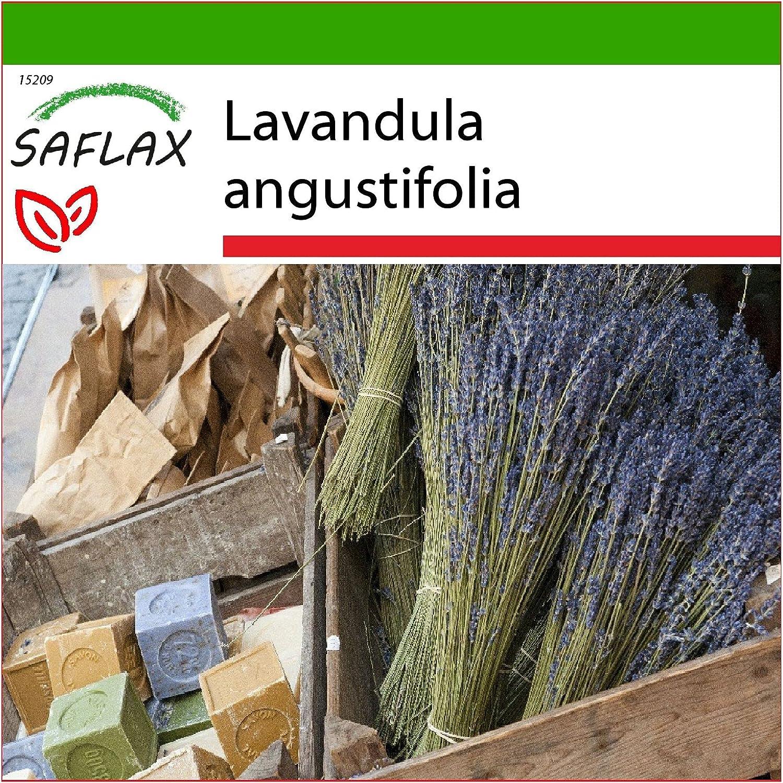 SAFLAX - Lavanda - 150 semillas - Con sustrato estéril para cultivo - Lavandula angustifolia