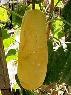 Semillas de cerezo amarillo helado Tros