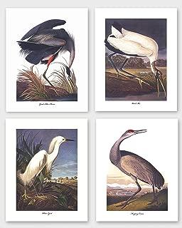 Bird Prints Set of 4 (Audubon Coastal Wall Art, Tropical Home Decor) 8x10 Unframed