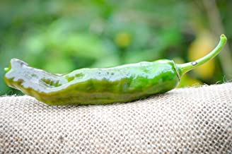 Shishito Pepper Premium Seed Packet