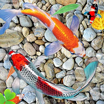 Best live fish wallpaper Reviews