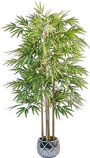 Maia Shop 1137 Bambú Cañas Naturales, Elaborados con los