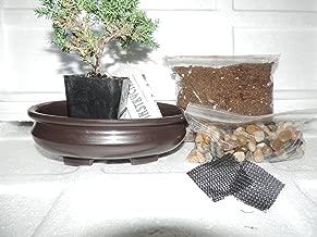 JM BAMBOO Bonsai Potting Kit, 6.25