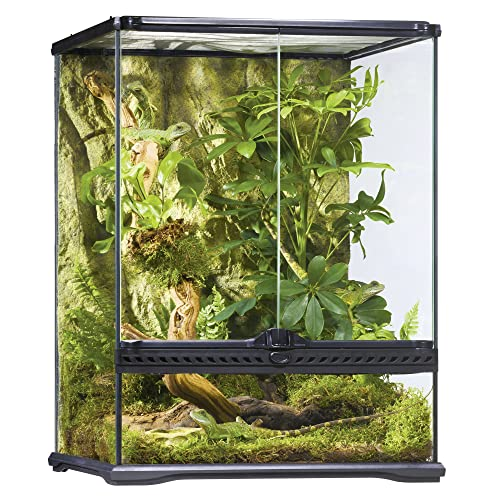 Frog Terrarium Amazon Com