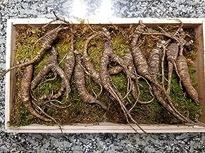 Best appalachian mountain ginseng Reviews