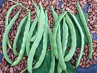 (Brown) Kentucky Wonder Pole Beans, 30+ Premium Heirloom Seeds, High Yields! Fantastic Addition to Your Home Garden!, (Isla's Garden Seeds),90% Germination, Non GMO, Highest Quality Seeds