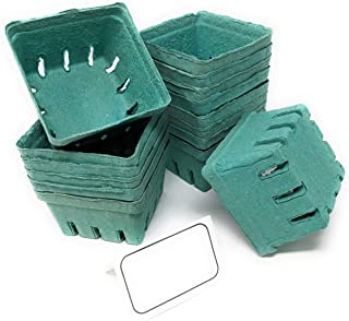 Best cardboard strawberry boxes Reviews