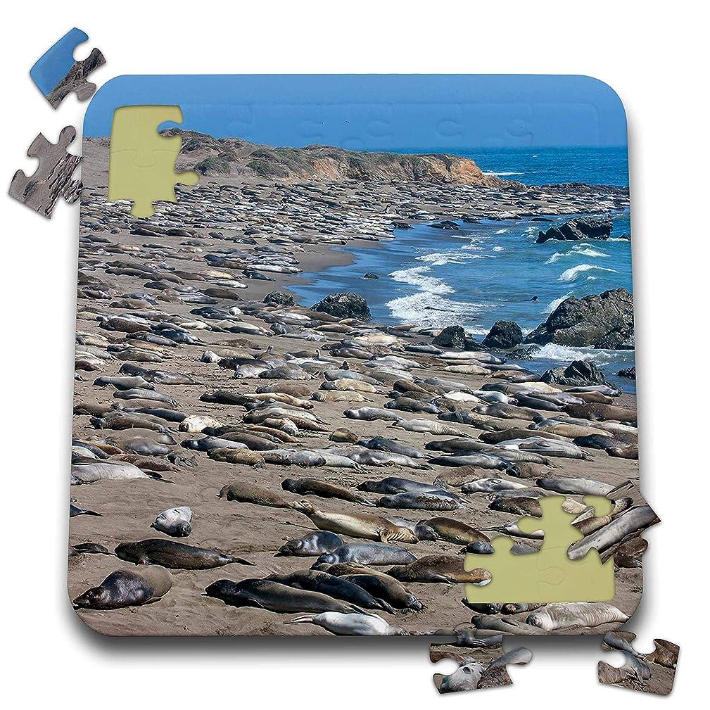 3dRose Danita Delimont - Seals - Elephant Seals on Beach, San Simeon, California - 10x10 Inch Puzzle (pzl_314728_2)