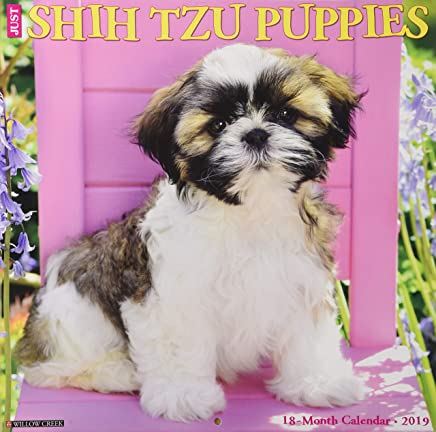 Just Shih Tzu Puppies 2019 Calendar