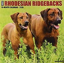 Just Rhodesian Ridgebacks 2019 Calendar