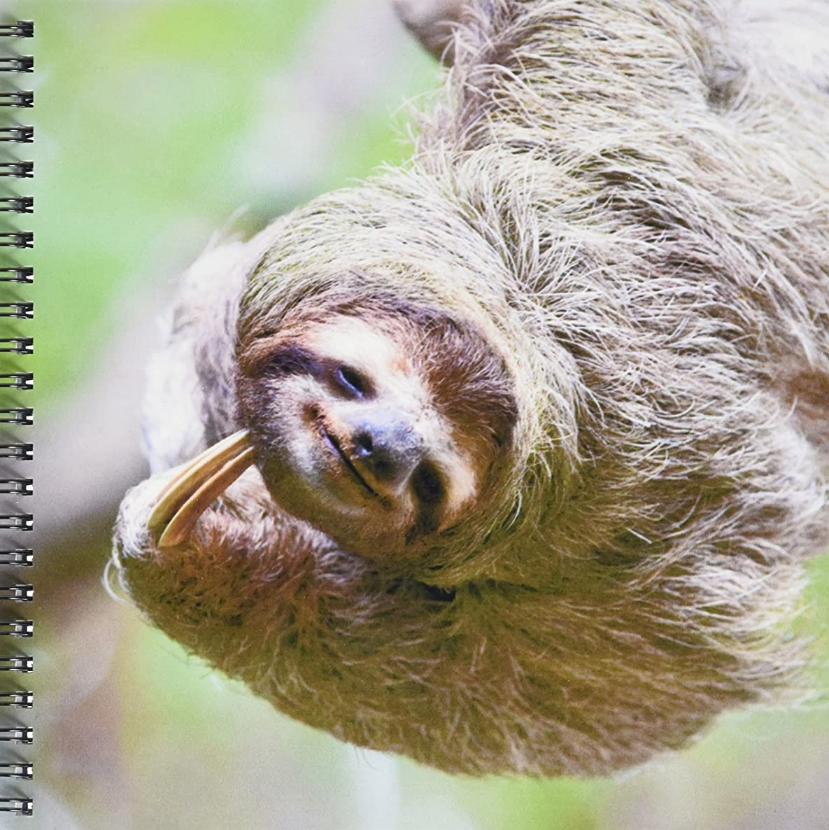 3dRose db_87171_1 Brown-Throated Sloth wildlife, Corcovado Costa Rica - SA22 JGS0017 - Jim Goldstein - Drawing Book, 8 by 8-Inch