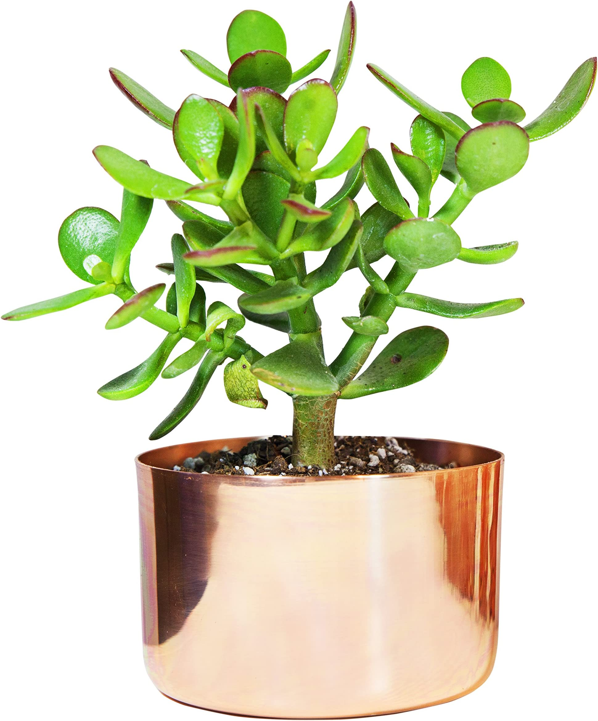 """4"""" Copper Succulent Planter - Perfect for All Plants - by Alchemade"""