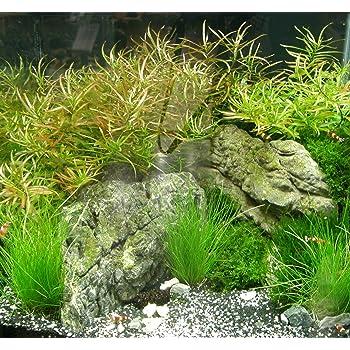 Muhlan Wasserpflanzen Nano Viii Set Aquarium 30 40 L Pflanzen Kies Deko Amazon De Garten