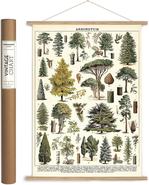 Cavallini Papers Washington Mall Co. Vintage Arboretum Hanging Poste Trust