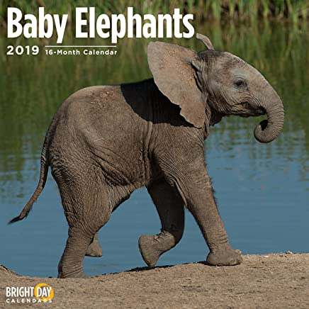 Baby Elephants 2019 16 Month Wall Calendar 12 x 12 Inches
