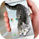Gatos no Telefone - Piada