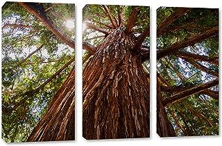 45 x 30 Total - Sequoia Redwood Tree Canvas Print Wall Art Big 3 Panel Split, Triptych Home Decor, Interior Design