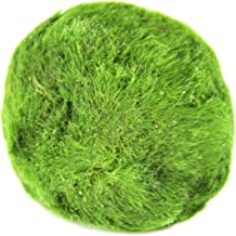 Joyfay Marimo Moss Ball- Extra Large 1.5-2 Inch Eco-Friendly Flourishing Live Bright Green Healthy Moss Balls, Low Maintenance Algae Growth Deterrent for Bettas, Shrimp, and Snails, 2 Pack, a Product