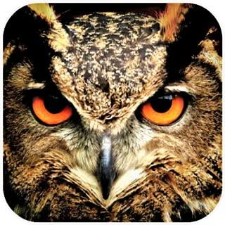 Best free owl wallpaper Reviews