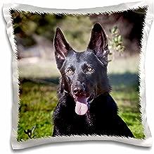 3dRose Portrait of a German Shepherd dog - NA02 ZMU0133 - Zandria Muench Beraldo - Pillow Case, 16 by 16-inch (pc_140413_1)