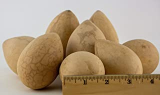 Dried Egg Gourds for Crafting box of 25