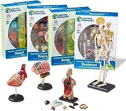 مدل های آناتومی آموزش منابع مجموعه، مغز، بدن، قلب، اسکلت، نمرات 3+