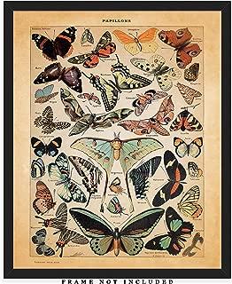 Vintage Butterflies Wall Art Print: Unique Room Decor for Men & Women - (8x10) Unframed Picture - Great Gift Idea