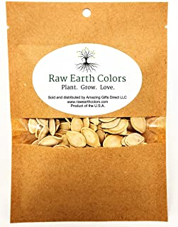 Pumpkin Seeds for Planting - to Plant Connecticut Fields Pumpkins - Large 200 Count Packet!