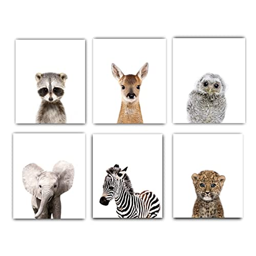 Designs by Maria Inc. Nursery Decor Pictures (8x10)   Set of 6 (Unframed) Cute Baby Animal Photography Wall Prints for Boys & Girls Room