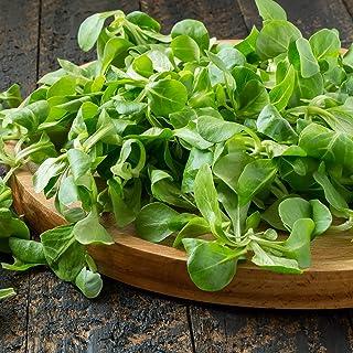 Outsidepride Corn Salad Plant Seed - 1000 Seeds