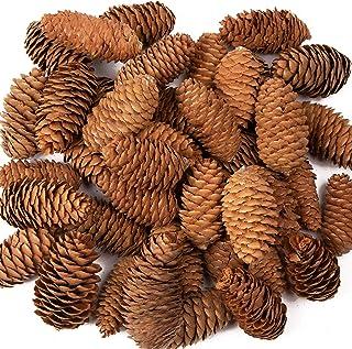 Baker Ross Long Pine Cones Value Pack - Perfekt för barnkonst och hantverk, jul, sensorisk stimulering och mer (paket med 20)