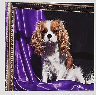 3dRose Cavalier King Charles Spaniel Dog - US05 ZMU0132 Greeting Cards, 6