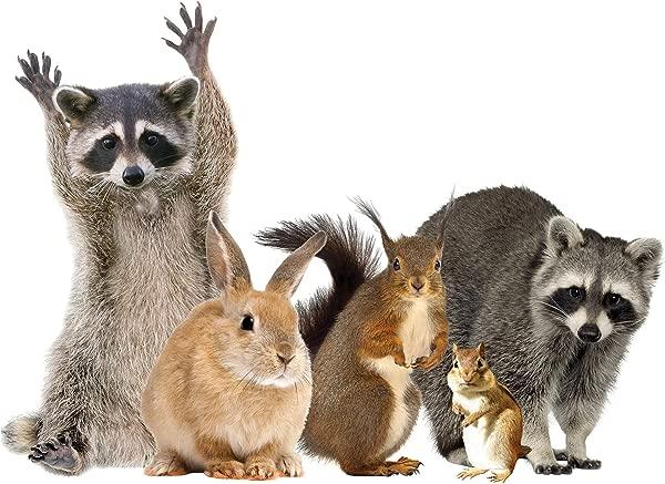 LENA 菲奥雷公司林地动物窗口贴花保鲜浣熊朋友乙烯基贴纸