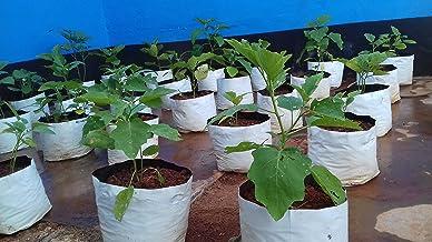 Rochfern Grow Bag,100% Virgin Polyethylene, (24 x 24 x 40 Cms) .UV Treated White 20 Grow Bags