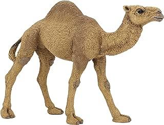 Best figure of camel Reviews