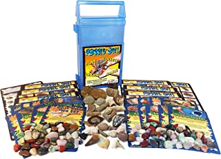 FOSSIL ON! Game with Fossil, Rock & Mineral Collection - Trilobite, Shark, Dinosaur, Amethyst, Jasper and lots more - Coll...