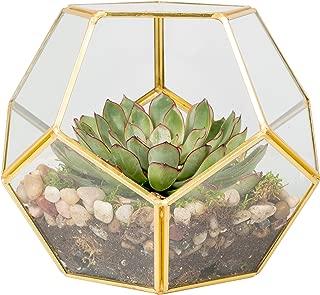 Deco Glass Geometric Terrarium, Succulent & Air Plant - Sphere (8.2 x 8.2 x 8.2 in)