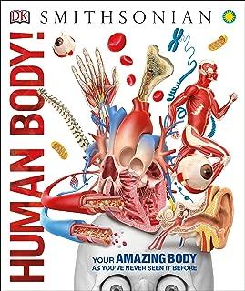 human body digestive system model
