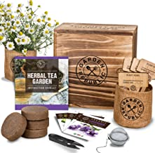 Indoor Herb Garden Seed Starter Kit - Herbal Tea Growing Kits, Grow Medicinal Herbs Indoors, Lavender, Chamomile, Lemon Ba...