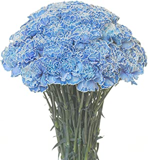 Carnations Multiple Colors and Quantities (100, Tinted Blue)