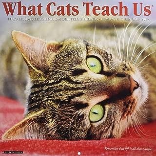 What Cats Teach Us 2019 Wall Calendar