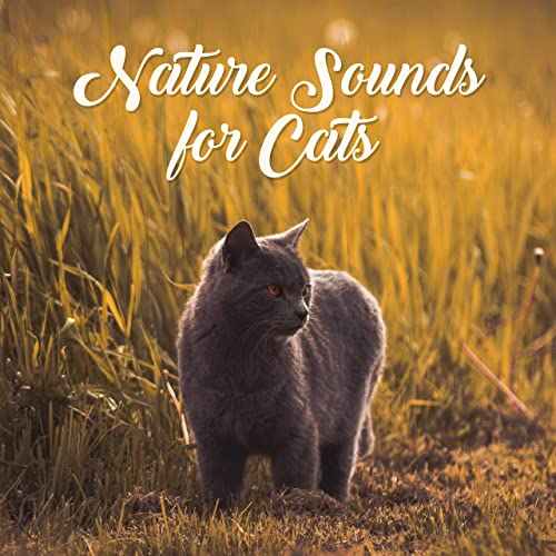 Nature Sounds for Cats: Relaxing Music Therapy, Blissful