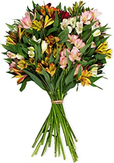 Benchmark Bouquets Assorted Peruvian Lilies, No Vase (Fresh Cut Flowers)