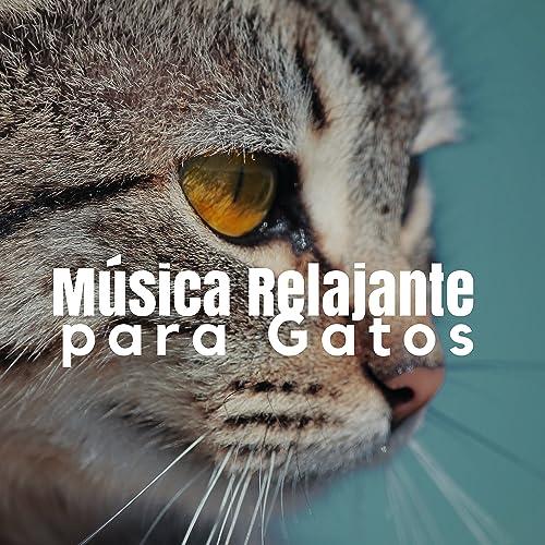 Música Relajante para Gatos  Sonidos de la Naturaleza y Música Calma para Relajar Gatos y